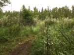 Riding wet single track trails in Fish Creek park